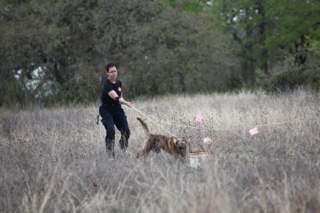 dog searching